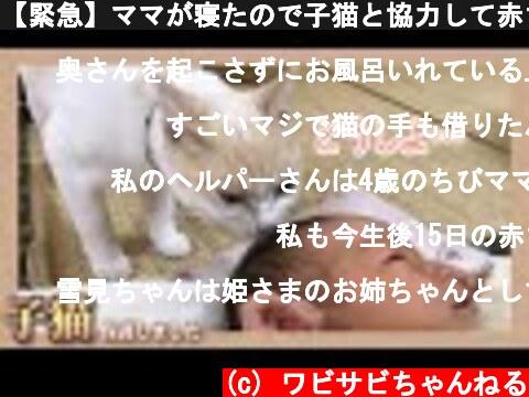 【緊急】ママが寝たので子猫と協力して赤ちゃんの沐浴をします  (c) ワビサビちゃんねる