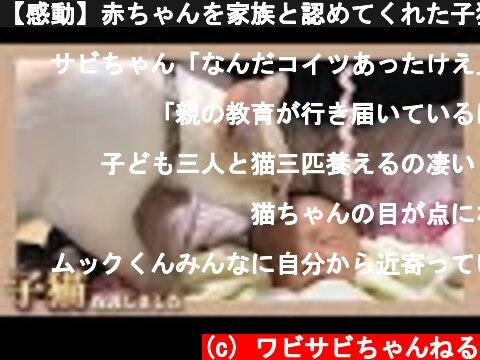 【感動】赤ちゃんを家族と認めてくれた子猫  (c) ワビサビちゃんねる
