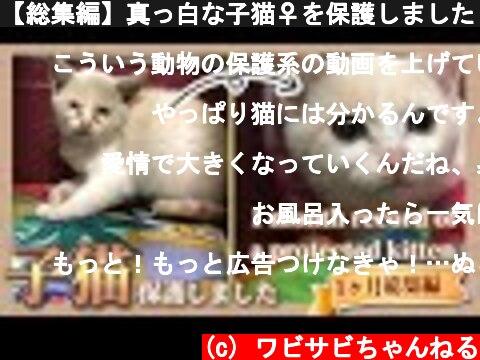 【総集編】真っ白な子猫♀を保護しました【一ヶ月間の歩み】 - [omnibus] I taking in stray kittens like milk tea. [1st month]  (c) ワビサビちゃんねる