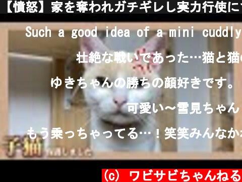 【憤怒】家を奪われガチギレし実力行使にでた白猫  (c) ワビサビちゃんねる