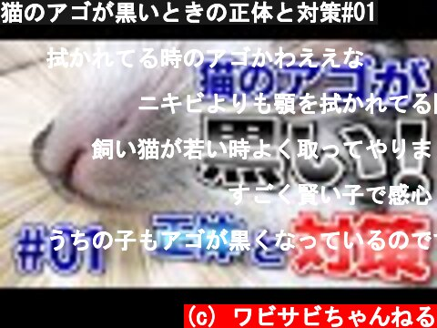 猫のアゴが黒いときの正体と対策#01  (c) ワビサビちゃんねる