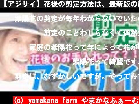 【アジサイ】花後の剪定方法は、最新版の動画をアップしていますので、そちらをご覧ください!https://youtu.be/DnaiFhMNA04  (c) yamakana farm やまかなふぁーむ