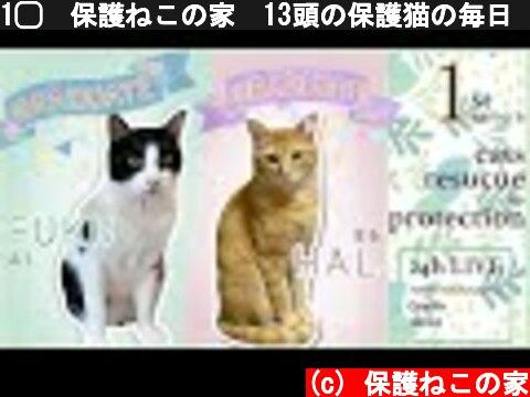 1️⃣✅保護ねこの家✅13頭の保護猫の毎日(Cats Rescue & Protection Japan)(Every day of 13 protected cats)24時間ライブ配信  (c) 保護ねこの家