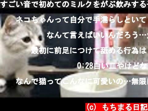 すごい音で初めてのミルクをがぶ飲みする子猫がこちら…!笑  (c) もちまる日記