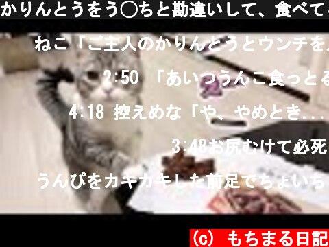 かりんとうをう◯ちと勘違いして、食べてる主を心配してくる猫!  (c) もちまる日記