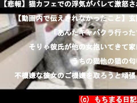 【悲報】猫カフェでの浮気がバレて激怒されました。  (c) もちまる日記