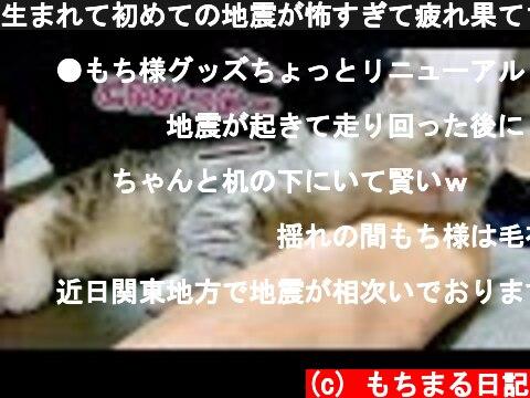 生まれて初めての地震が怖すぎて疲れ果てちゃった猫…笑  (c) もちまる日記