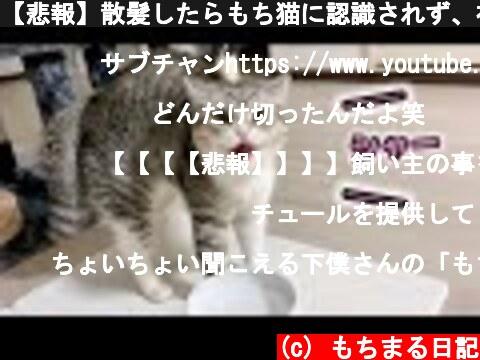 【悲報】散髪したらもち猫に認識されず、初めて威嚇されました。  (c) もちまる日記