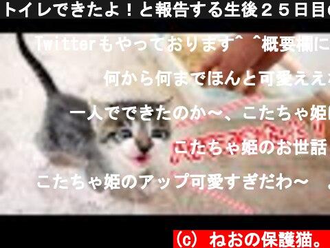 トイレできたよ!と報告する生後25日目の子猫が可愛すぎた【保護猫】  (c) ねおの保護猫。