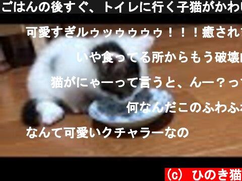 ごはんの後すぐ、トイレに行く子猫がかわいい  (c) ひのき猫