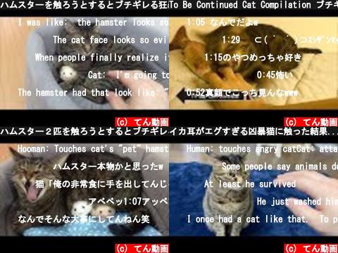 てん動画(おすすめch紹介)