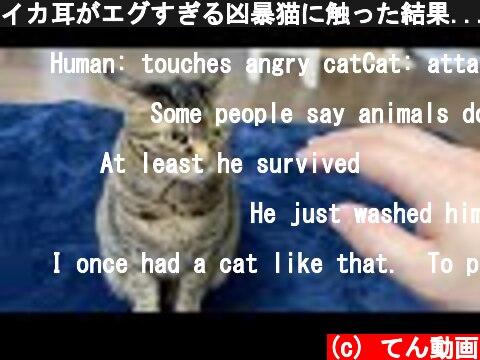 イカ耳がエグすぎる凶暴猫に触った結果...  (c) てん動画