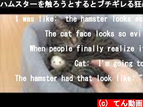 ハムスターを触ろうとするとブチギレる狂暴猫  (c) てん動画