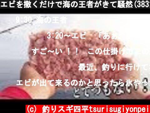 エビを撒くだけで海の王者がきて騒然(383話目)  (c) 釣りスギ四平tsurisugiyonpei