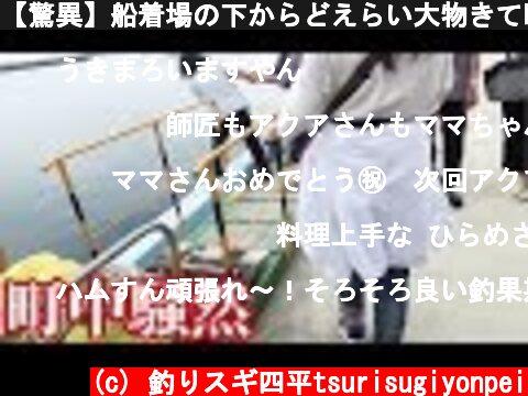 【驚異】船着場の下からどえらい大物きて町中騒然  (c) 釣りスギ四平tsurisugiyonpei