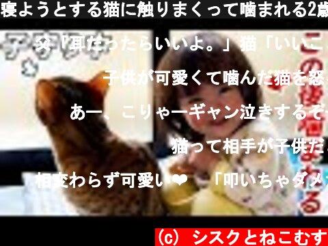 寝ようとする猫に触りまくって噛まれる2歳娘  (c) シスクとねこむす