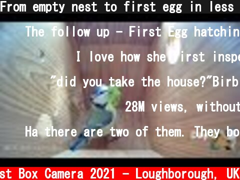 From empty nest to first egg in less than 8 minutes! - BlueTit nest box live camera highlights 2021  (c) Live Nest Box Camera 2021 - Loughborough, UK