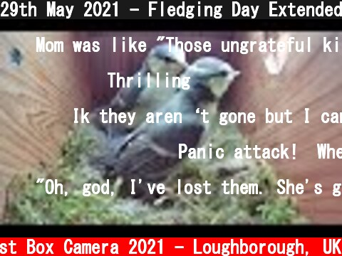29th May 2021 - Fledging Day Extended Version - Blue tit nest box live camera highlights  (c) Live Nest Box Camera 2021 - Loughborough, UK
