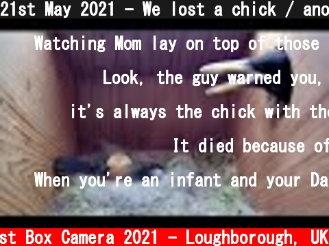 21st May 2021 - We lost a chick / another uninvited guest - Blue tit nest box live camera highlights  (c) Live Nest Box Camera 2021 - Loughborough, UK