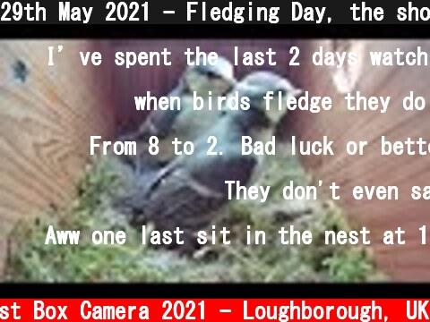 29th May 2021 - Fledging Day, the short version - Blue tit nest box live camera highlights  (c) Live Nest Box Camera 2021 - Loughborough, UK