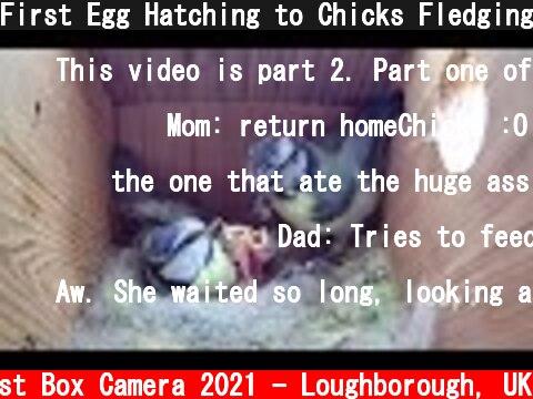 First Egg Hatching to Chicks Fledging - 21 days in 21 mins - BlueTit nest box camera highlights 2021  (c) Live Nest Box Camera 2021 - Loughborough, UK