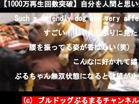 【1000万再生回数突破】自分を人間と思い込んでる犬、バァバとのお泊り会で呂布の強さを手に入れる!  (c) ブルドッグぶるまるチャンネル