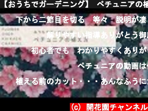 【おうちでガーデニング】 ペチュニアの植え方 【豆知識】  (c) 開花園チャンネル