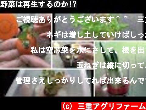 野菜は再生するのか!?  (c) 三重アグリファーム