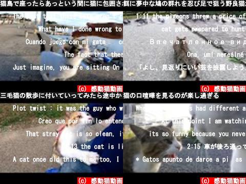 感動猫動画(おすすめch紹介)