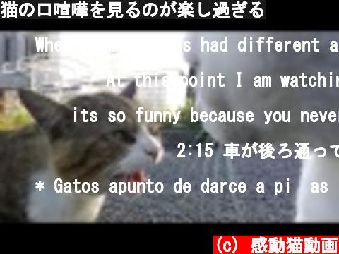 猫の口喧嘩を見るのが楽し過ぎる  (c) 感動猫動画