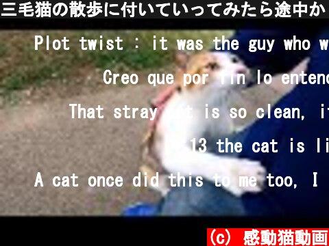 三毛猫の散歩に付いていってみたら途中から強烈に甘えてくる様になった  (c) 感動猫動画