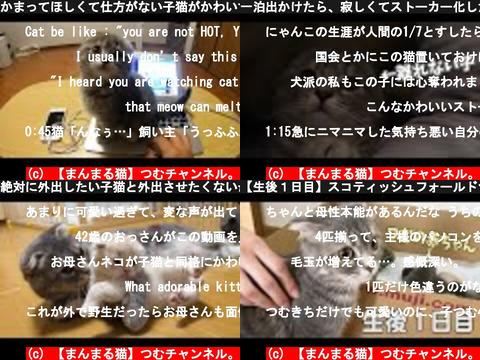 【まんまる猫】つむチャンネル。(おすすめch紹介)