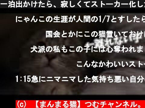 一泊出かけたら、寂しくてストーカー化した子猫 stoking cute kitten  (c) 【まんまる猫】つむチャンネル。