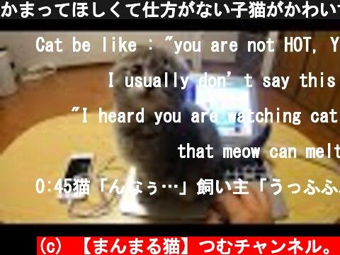 かまってほしくて仕方がない子猫がかわいすぎた kitten loves sitting on the pc too much  (c) 【まんまる猫】つむチャンネル。