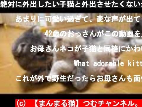 絶対に外出したい子猫と外出させたくない母猫の攻防がかわいい…スコティッシュフォールドつむの子猫の成長記録…kitten vs mother  (c) 【まんまる猫】つむチャンネル。