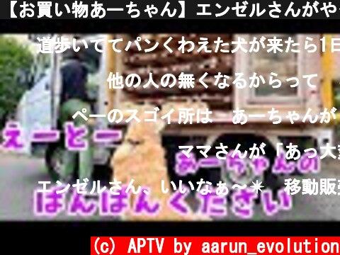 【お買い物あーちゃん】エンゼルさんがやって来た! ゴールデンレトリバー  (c) APTV by aarun_evolution