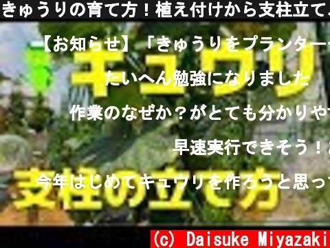 きゅうりの育て方!植え付けから支柱立て、ネット張りを教えます  (c) Daisuke Miyazaki