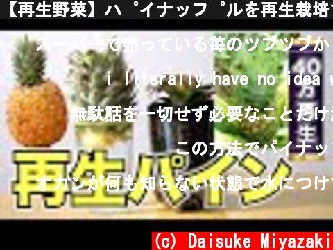 【再生野菜】パイナップルを再生栽培で育てる方法と日本で栽培する注意点【リボベジ】  (c) Daisuke Miyazaki