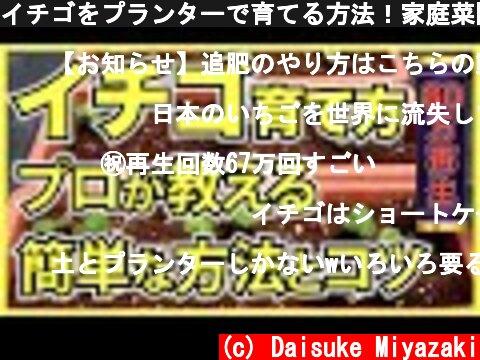 イチゴをプランターで育てる方法!家庭菜園で簡単にいちごが栽培できる  (c) Daisuke Miyazaki
