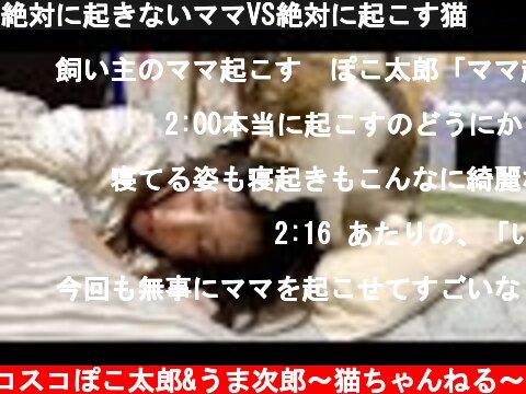 絶対に起きないママVS絶対に起こす猫  (c) スコスコぽこ太郎&うま次郎〜猫ちゃんねる〜