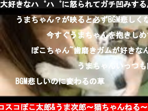 大好きなパパに怒られてガチ凹みする息子猫  (c) スコスコぽこ太郎&うま次郎〜猫ちゃんねる〜