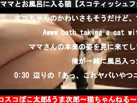 ママとお風呂に入る猫【スコティッシュフォールド】【Scottish Fold】  (c) スコスコぽこ太郎&うま次郎〜猫ちゃんねる〜
