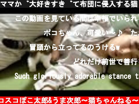 ママが大好きすぎて布団に侵入する猫🐈  (c) スコスコぽこ太郎&うま次郎〜猫ちゃんねる〜