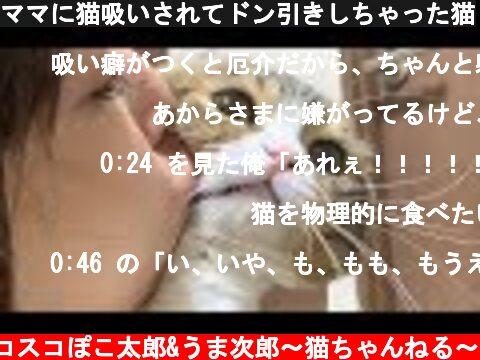 ママに猫吸いされてドン引きしちゃった猫  (c) スコスコぽこ太郎&うま次郎〜猫ちゃんねる〜
