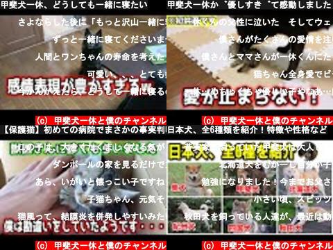 甲斐犬一休と僕のチャンネル(おすすめch紹介)