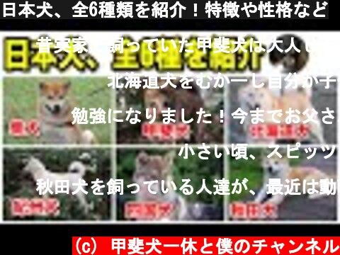 日本犬、全6種類を紹介!特徴や性格など  (c) 甲斐犬一休と僕のチャンネル
