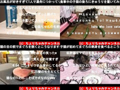 ちょりちゃみチャンネル(おすすめch紹介)