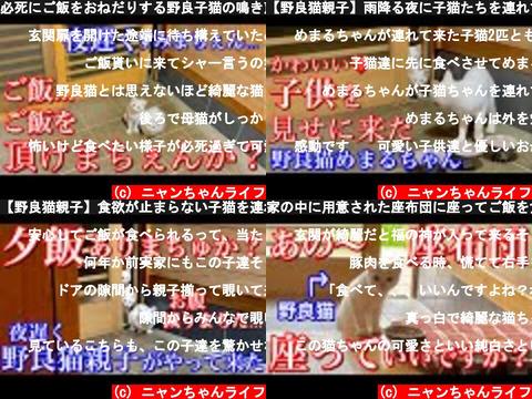 ニャンちゃんライフ(おすすめch紹介)