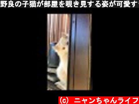 野良の子猫が部屋を覗き見する姿が可愛すぎる  (c) ニャンちゃんライフ