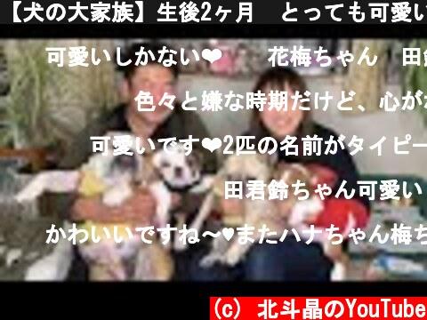 【犬の大家族】生後2ヶ月🐶とっても可愛いブルドッグの赤ちゃんが我が家にきました  (c) 北斗晶のYouTube
